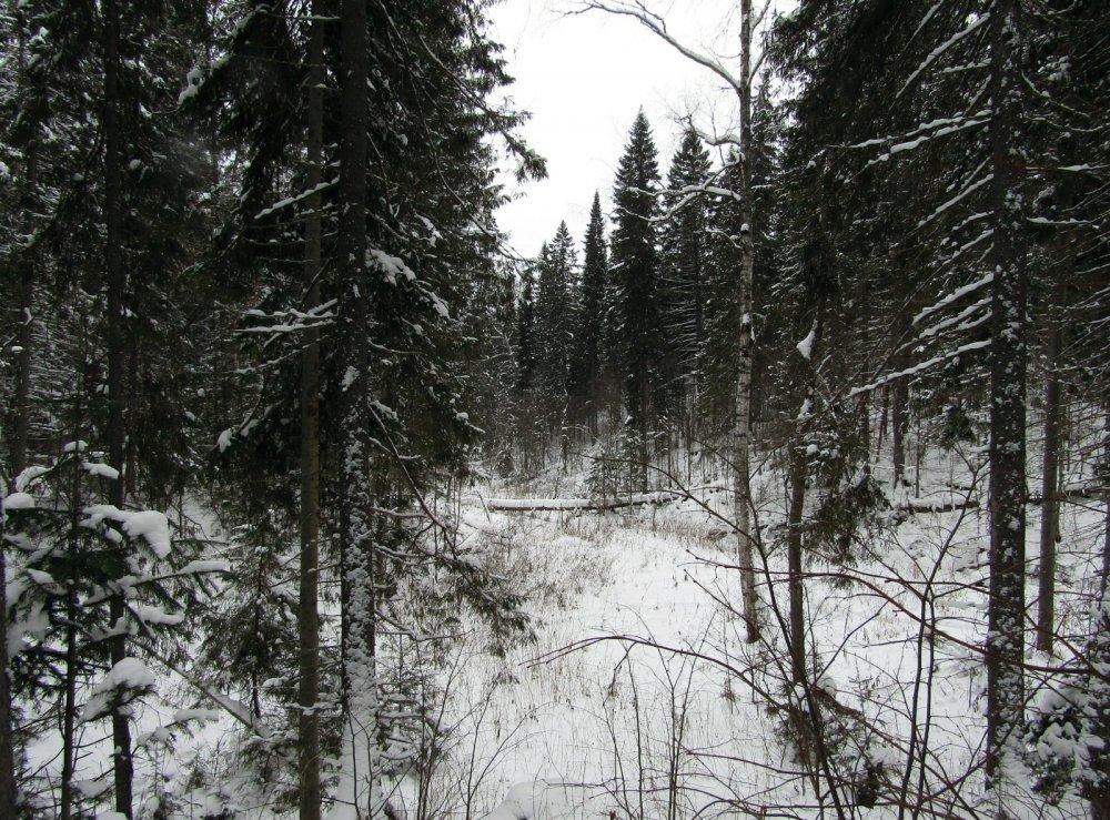 Лес зовёт.