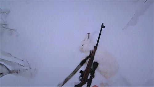 Охота зимой на зайца. Мелкашка TOZ-78-04M. 22lr