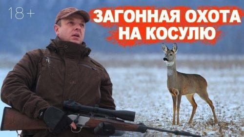 Загонная охота на КОСУЛЮ / 2000 косуль в хозяйстве