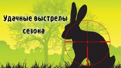 Охота на зайца. Удачные выстрелы сезона