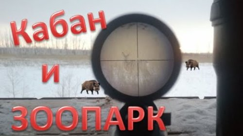 Поехал на кабана, а тут ЗООПАРК. I went to the wild boar, and then the ZOO. 4К