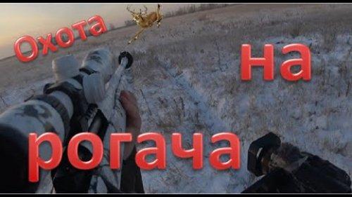 Охота на Рогачей. Сибирская косуля. Hunting for Stag beetles. Siberian roe deer. 4K