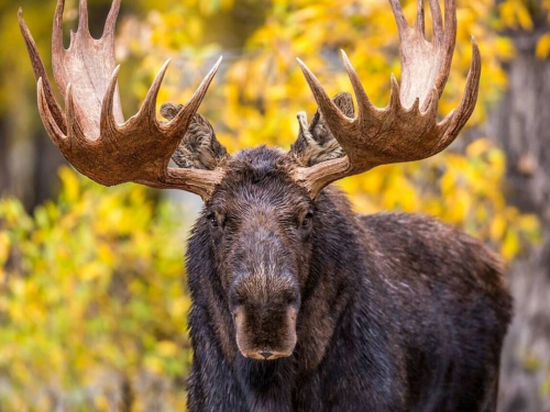 В Новосибирской области предложили изменить выдачу разрешений на охоту
