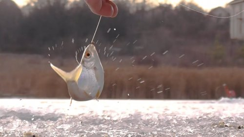 Вот это жор - тут много рыбы!!! Ловля плотвы зимой на мормышку. Зимняя рыбалка 2021.