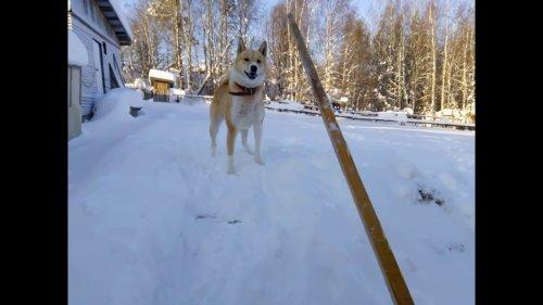Собачье счастье! ЗСЛ Буран и океан снега!