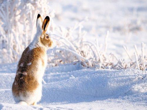 По первому снегу на зайца.