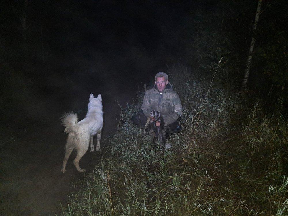 Ночью с собаками