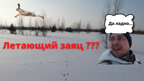 Охота на зайца зимой 2021. Летающий заяц. Hare hunting in winter in Siberia