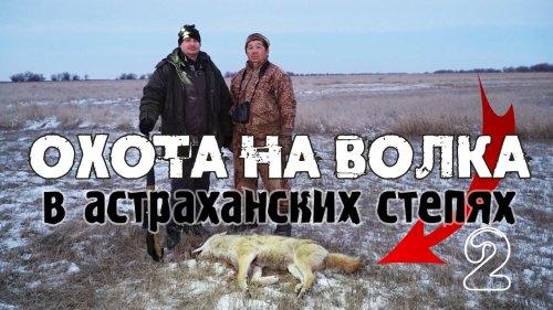 Волк загнал фермера на столб! Охотник успел вовремя.Охота на волка в астраханских степях.