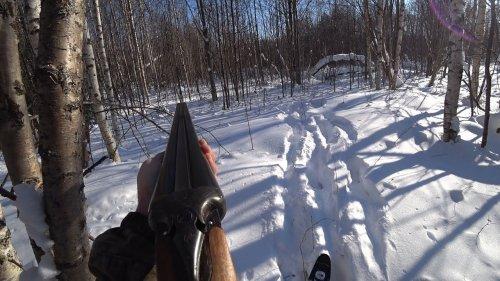 Закрытие охоты. По лосиным и волчьим тропам, жизнь жестока.