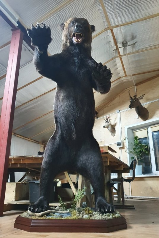 Полноразмерное чучело медведя