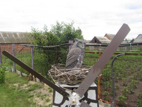 Гнездо на огороде...