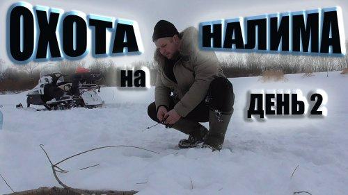 Охота на налима река Чулым Снегоход Тайга Варяг 550 рыбалка на жерлицы ловим ерша