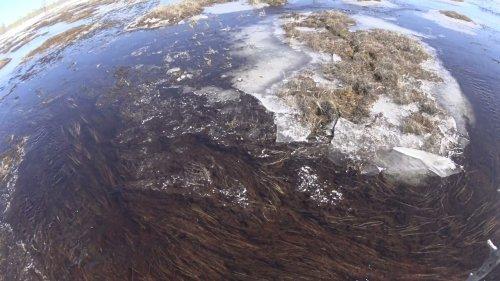 Весенняя охота на гусей 2021 на Севере  Разведка