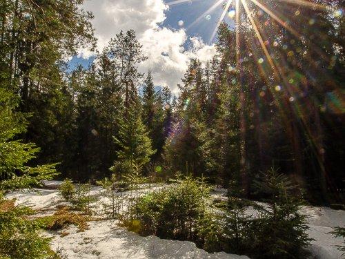 А глубоко в лесу еще зима.