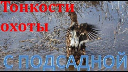 Тонкости охоты с подсадной. Вызаривание уток. The subtleties of hunting with a decoy. Brooding ducks