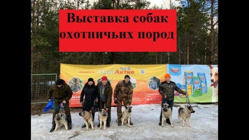 Выставка собак охотничьих пород. Эльхунды, карельские лайки, гончаки и прочие породы собак.