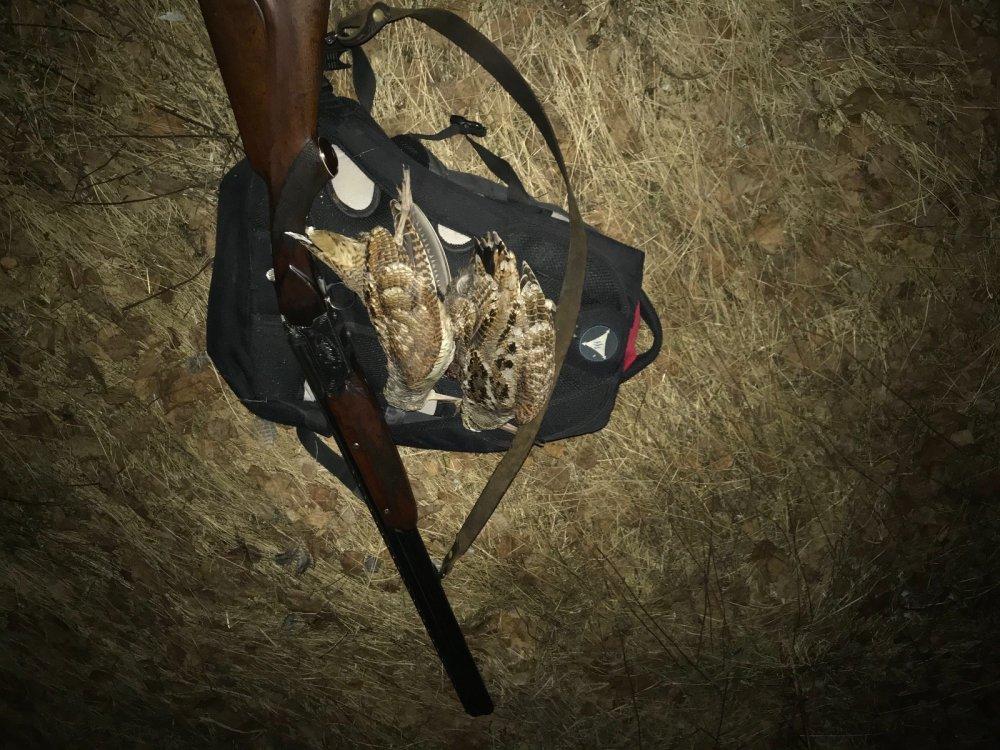 Охота с тоз 34