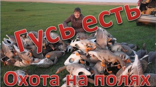 Нашли гуся. Охота прет. Found a goose. Hunting rushing. 4K