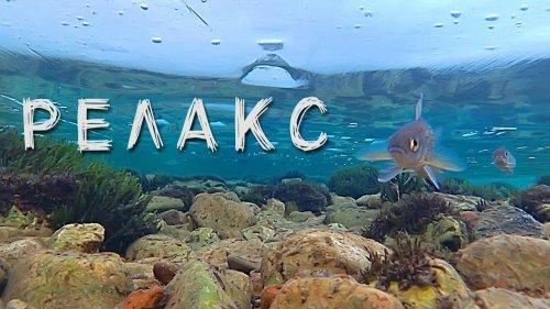 Подводные съёмки. Рыбалка. Релакс.