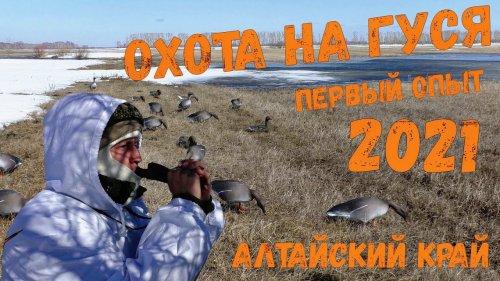 Охота на гуся в Алтайском крае. Первый опыт