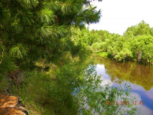 Таёжная речка Мисс, приток Туя