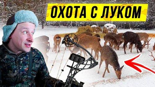 ОХОТА с луком на оленя. Блочный ЛУК Mathews VXR 28. Открытие сезона охоты 2021.