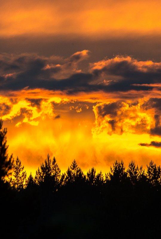 Огненный закат над соснами.