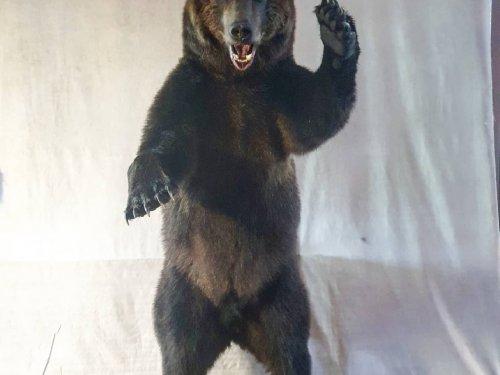 Еще один проект завершен. Камчатский бурый медведь.