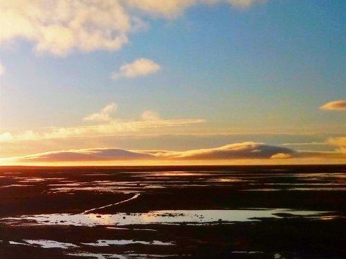 Арктическая пустыня с болотцами.