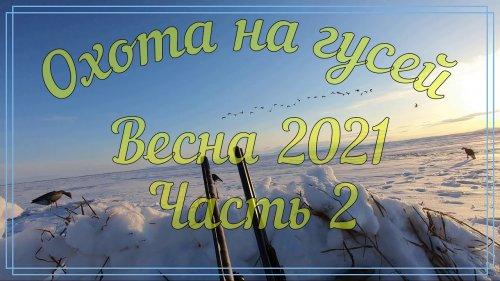 Охота на гусей, весна 2021. Часть 2. Камчатка, Пенжина. Goose hunting. Spring hunt in Kamchatka.