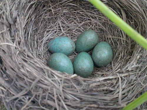 Чьё гнездо???