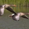 Забайкальцы инициируют отказ от весенней охоты на птиц