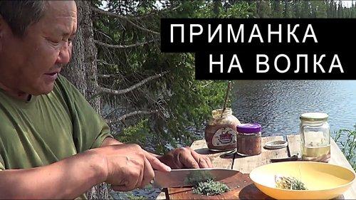 Изготовление ПАХУЧЕЙ ПРИМАНКИ на ВОЛКА.