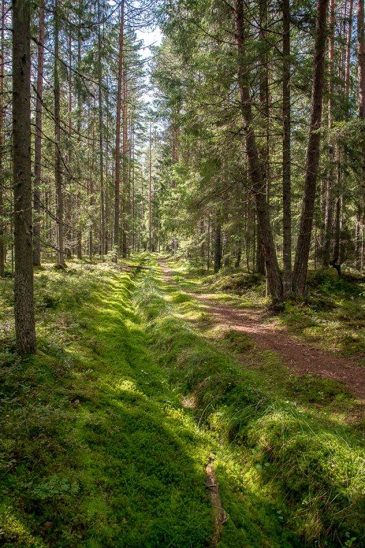 Лесными дорожками.