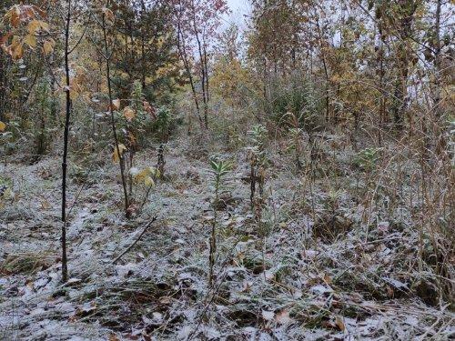 Первый снег. 26 сентября
