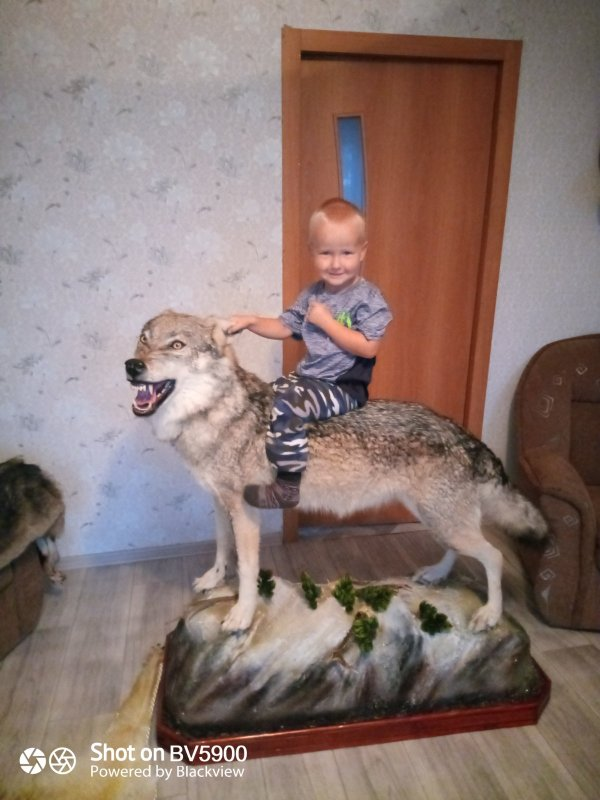 На сером волке.