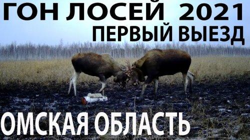 Гон лосей2021 Первый выезд Омская область