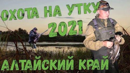 Открытие охоты 2021 / Вторая вечерка / Алтайский край / Охота на утку