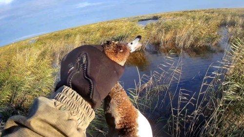 Охота на Утку.  Утрянка на озере Убинское.