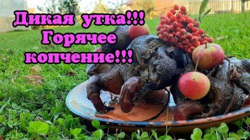 Дикая утка в яблоках! Горячее копчение!