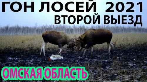 Гон лосей2021 Второй выезд Омская область