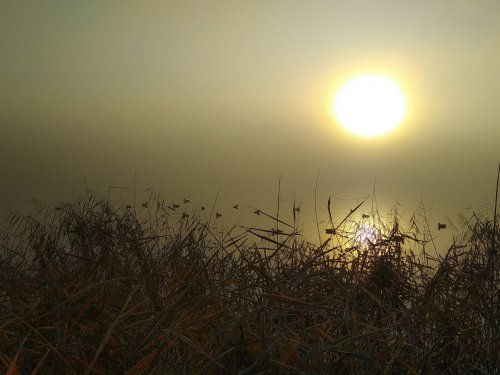 Туманное морозное утро 17