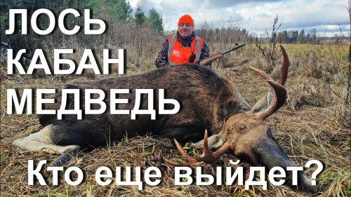 Охота на лося, но из загона вышел МЕДВЕДЬ и КАБАНЫ.