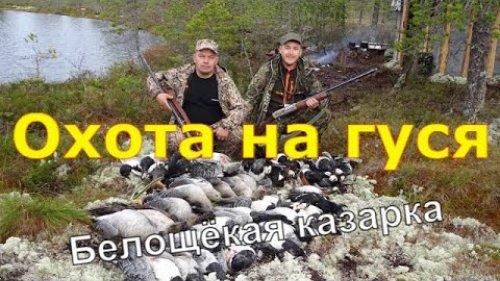 Охота на северного гуся 2ч  Архангельская область